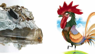 El gallo y la margarita