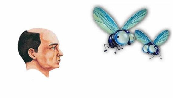 Fabula El calvo y la mosca
