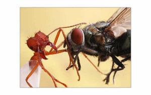 La mosca y la hormiga - Fábulas de Esopo