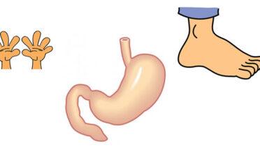 Las manos, los pies y el vientre - Fábulas de esopo