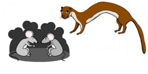 La comadreja y los ratones - Fábulas de esopo